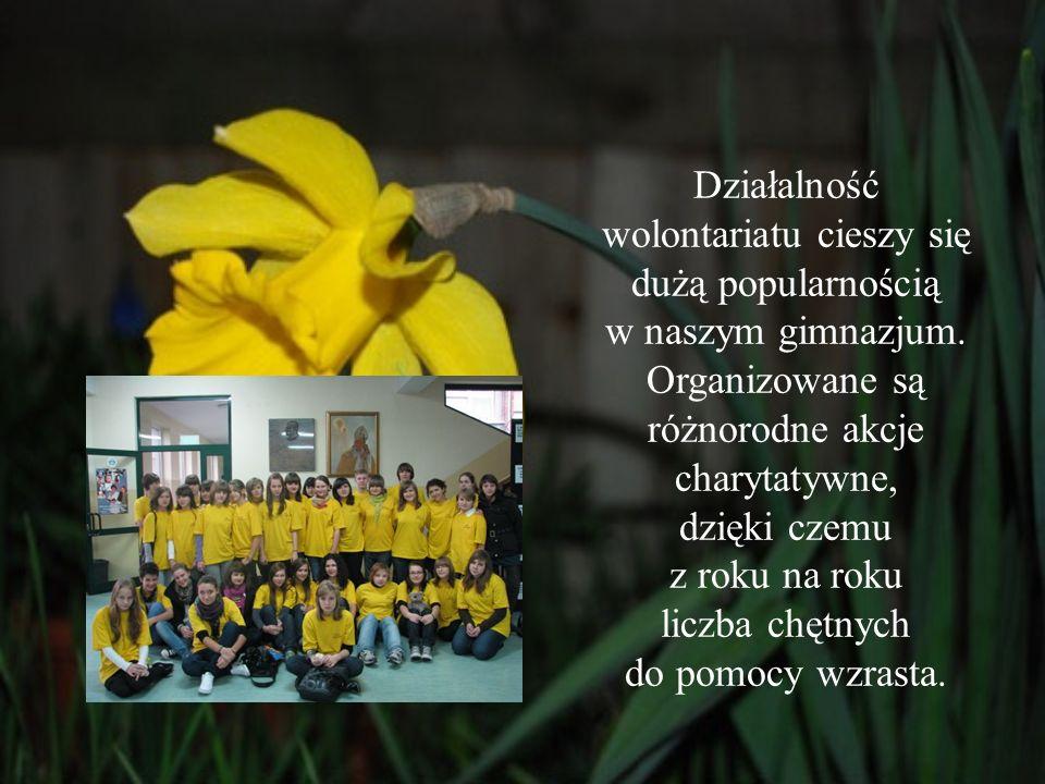 Działalność wolontariatu cieszy się dużą popularnością w naszym gimnazjum.