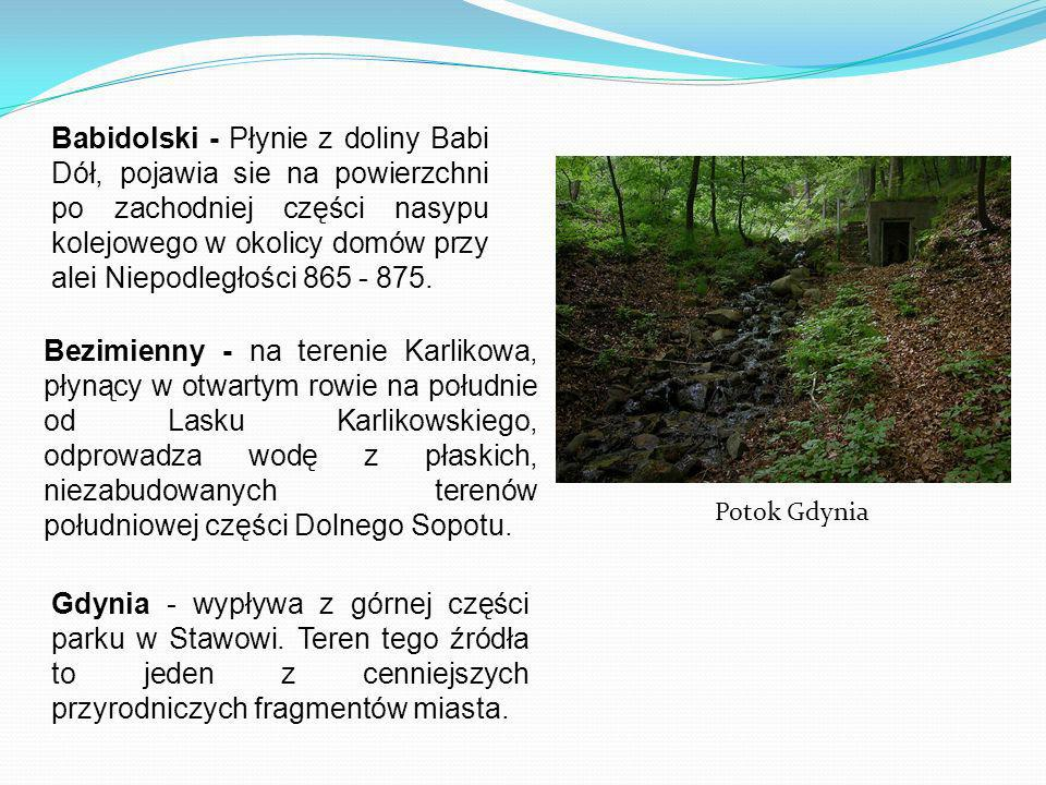 Babidolski - Płynie z doliny Babi Dół, pojawia sie na powierzchni po zachodniej części nasypu kolejowego w okolicy domów przy alei Niepodległości 865 - 875.