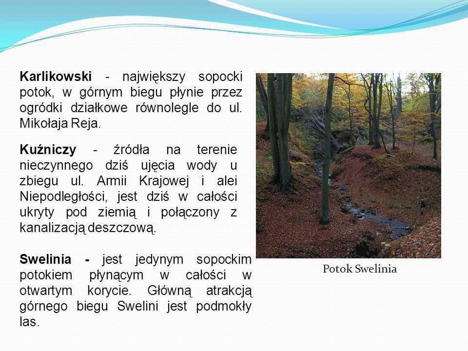 Karlikowski - największy sopocki potok, w górnym biegu płynie przez ogródki działkowe równolegle do ul. Mikołaja Reja.
