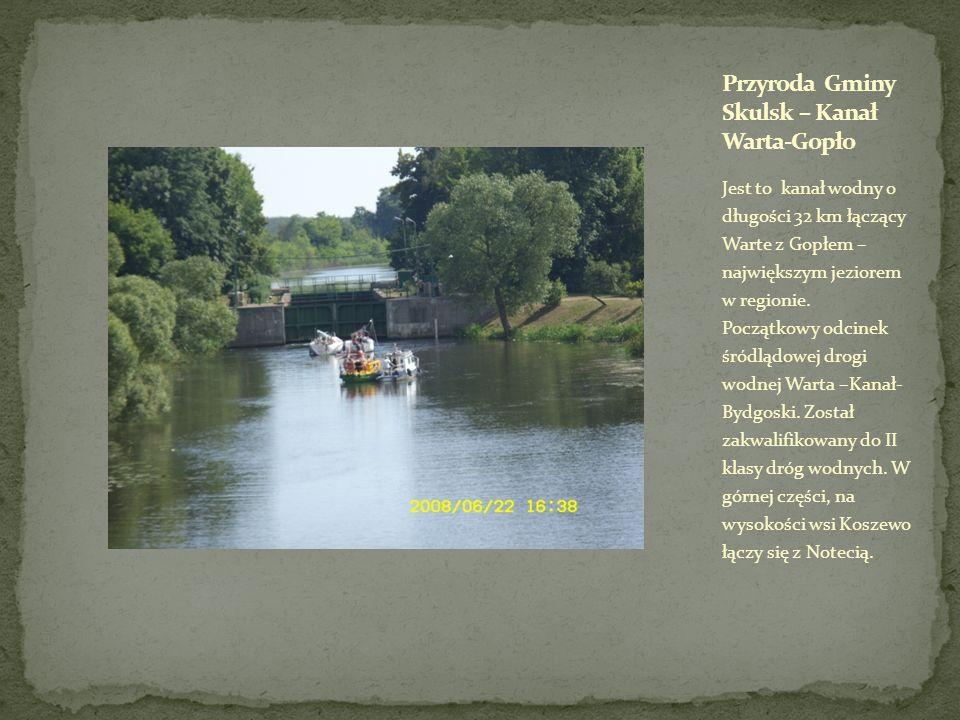 Przyroda Gminy Skulsk – Kanał Warta-Gopło