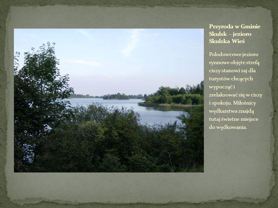 Przyroda w Gminie Skulsk – jezioro Skulska Wieś