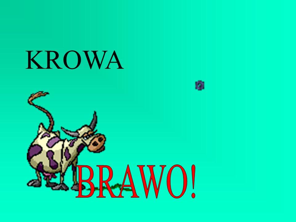 KROWA BRAWO!