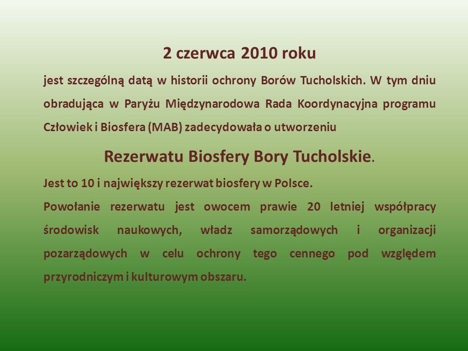 Rezerwatu Biosfery Bory Tucholskie.