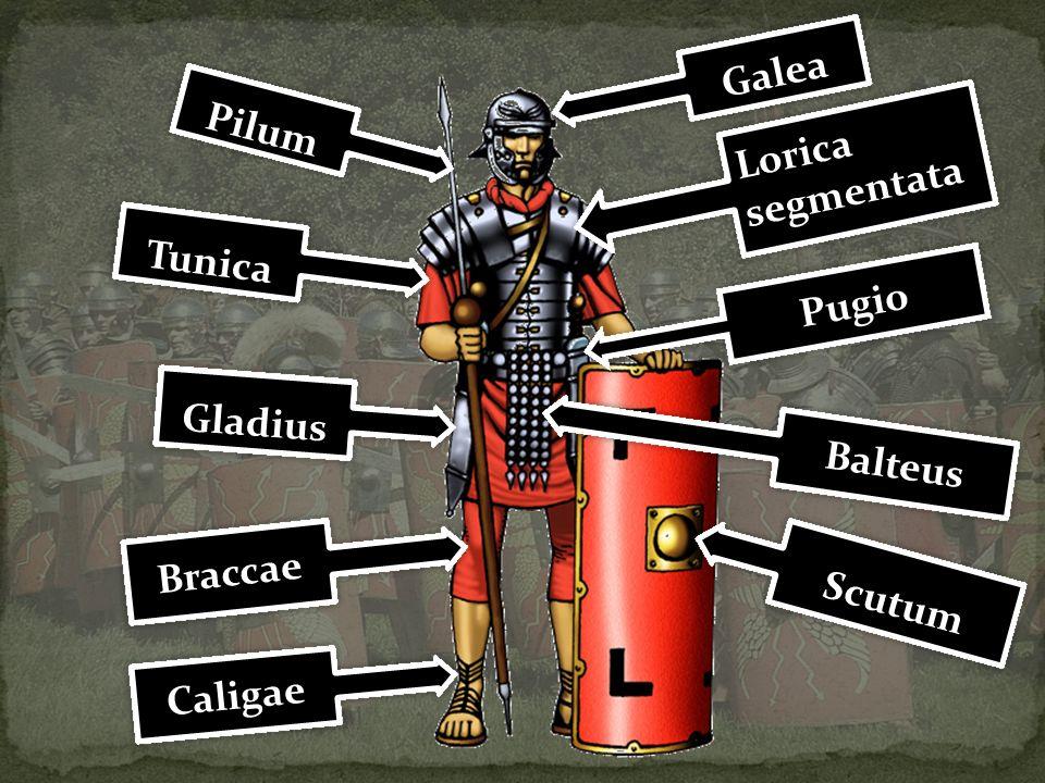 Galea Pilum Lorica segmentata Tunica Pugio Gladius Balteus Braccae Scutum Caligae