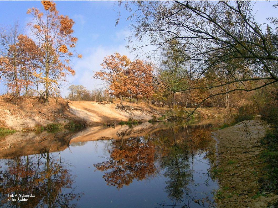 Fot. A. Sękowska rzeka Świder