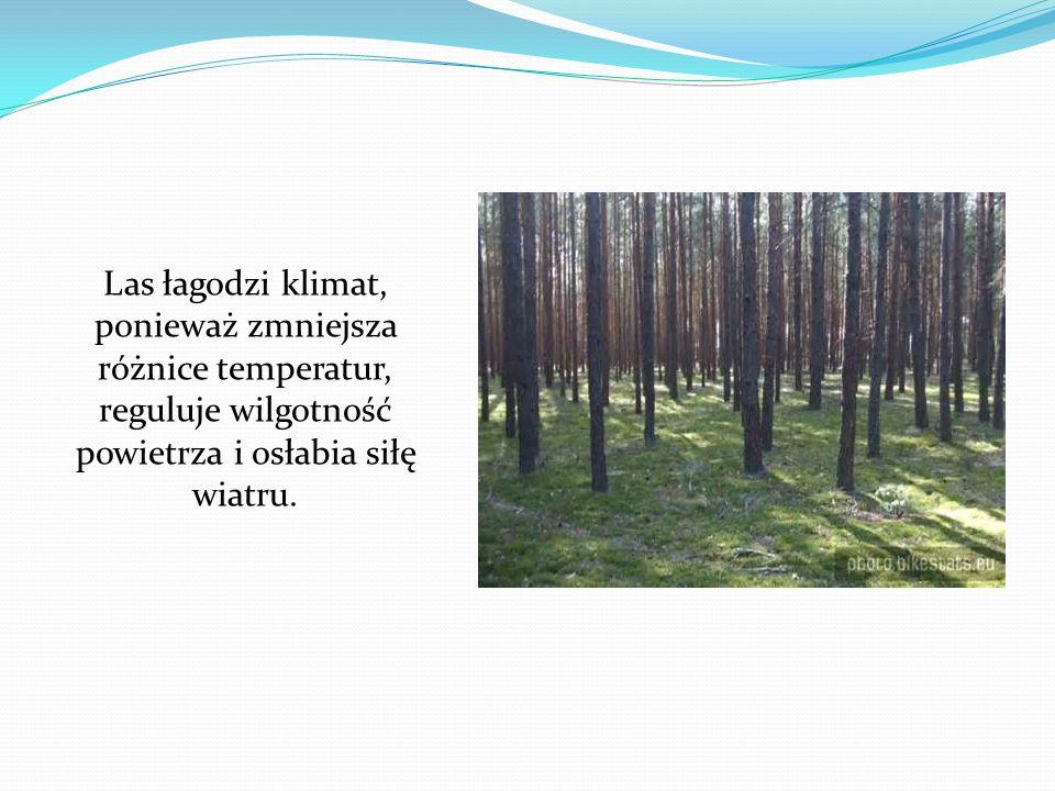 Las łagodzi klimat, ponieważ zmniejsza różnice temperatur, reguluje wilgotność powietrza i osłabia siłę wiatru.