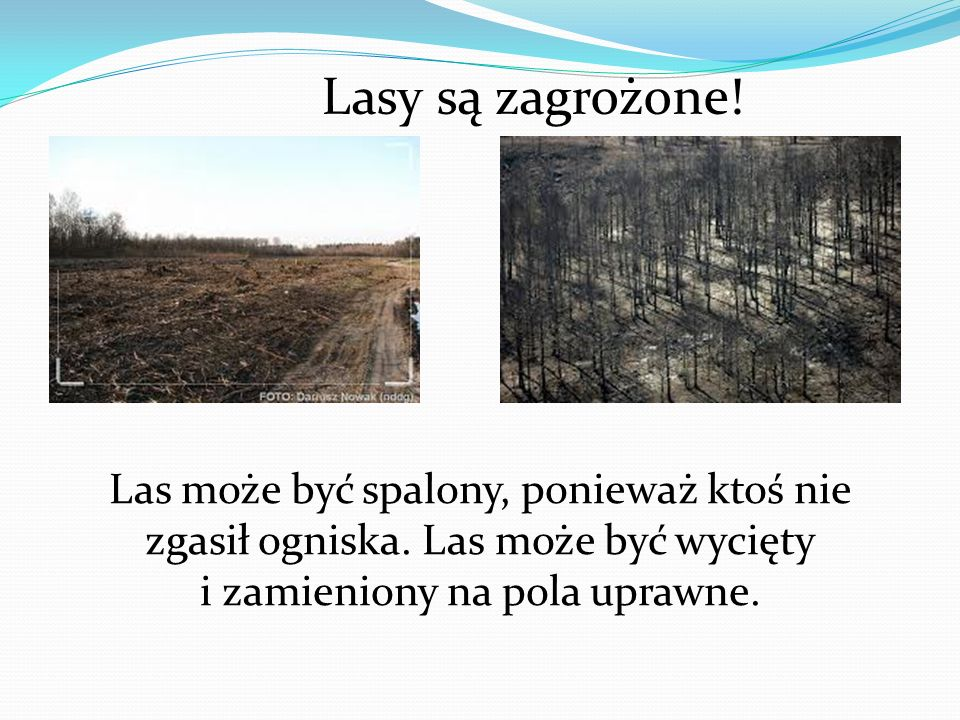 Lasy są zagrożone. Las może być spalony, ponieważ ktoś nie zgasił ogniska.