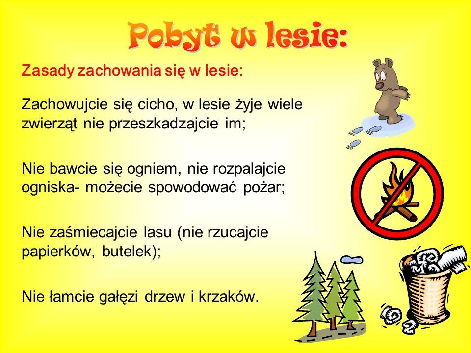 Pobyt w lesie: Zasady zachowania się w lesie: