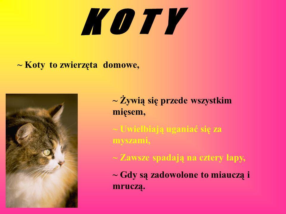 K O T Y ~ Koty to zwierzęta domowe,