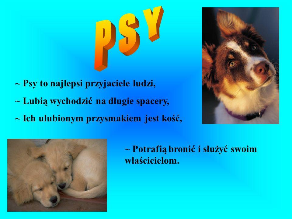 P S Y ~ Psy to najlepsi przyjaciele ludzi,