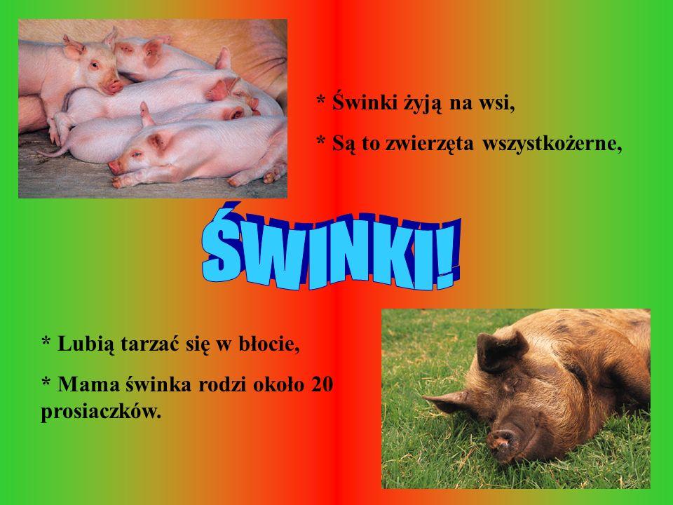 Ś W I N K I ! * Świnki żyją na wsi, * Są to zwierzęta wszystkożerne,