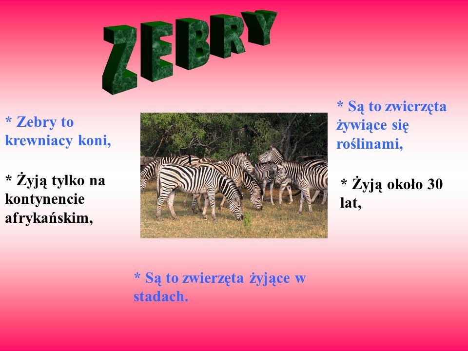 Z E B R Y * Są to zwierzęta żywiące się roślinami,