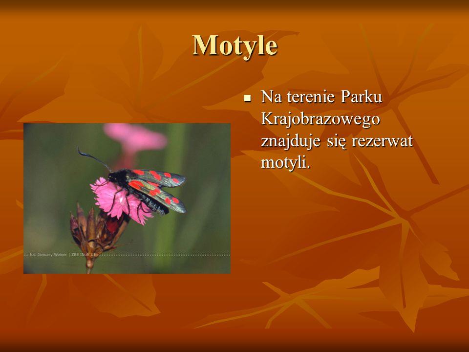 Motyle Na terenie Parku Krajobrazowego znajduje się rezerwat motyli.