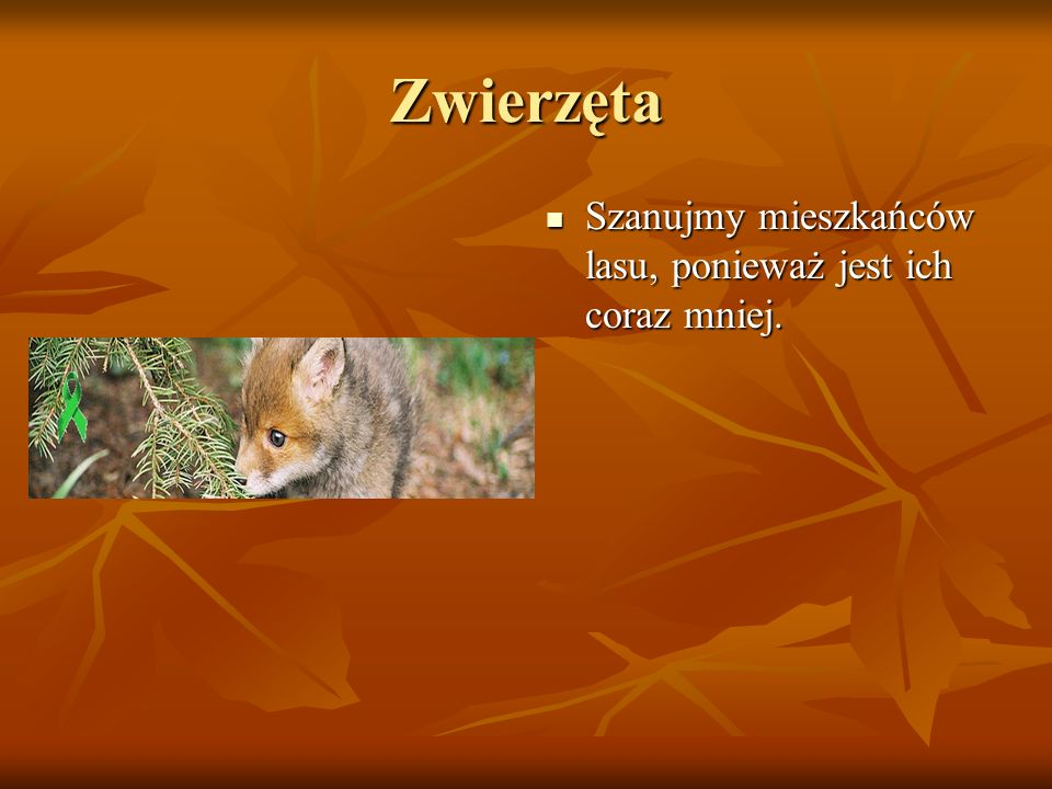 Zwierzęta Szanujmy mieszkańców lasu, ponieważ jest ich coraz mniej.