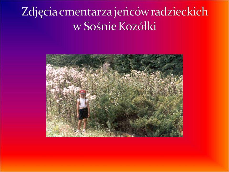 Zdjęcia cmentarza jeńców radzieckich w Sośnie Kozółki