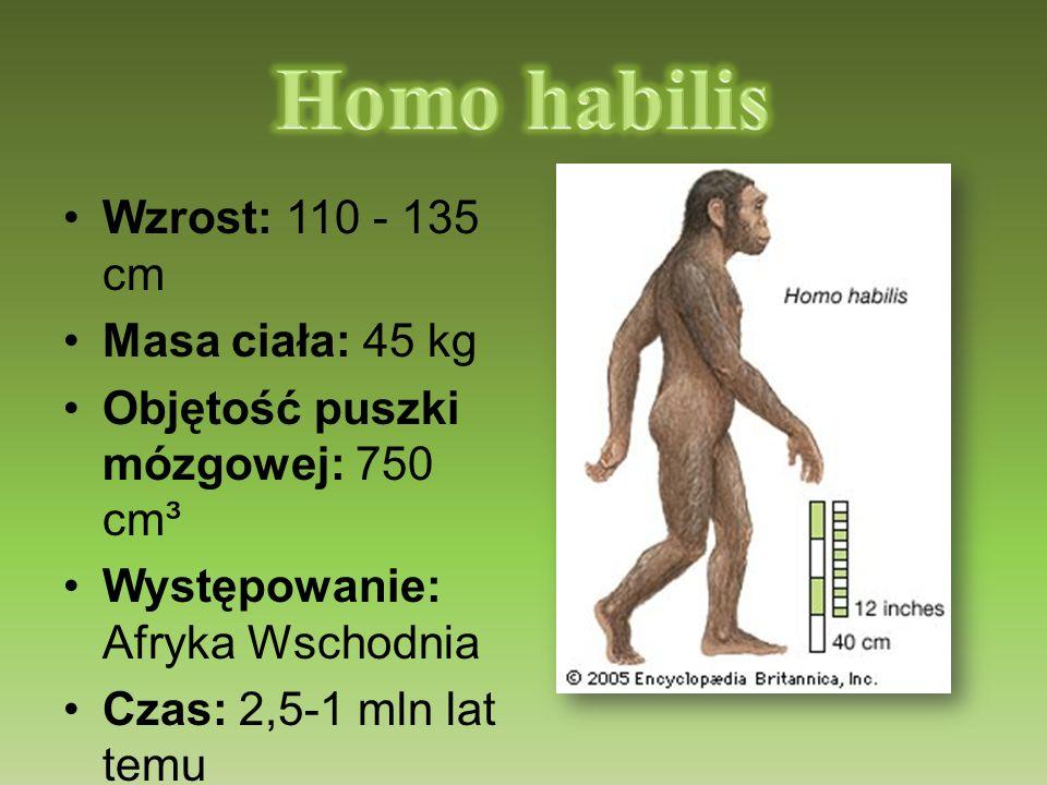 Homo habilis Wzrost: 110 - 135 cm Masa ciała: 45 kg