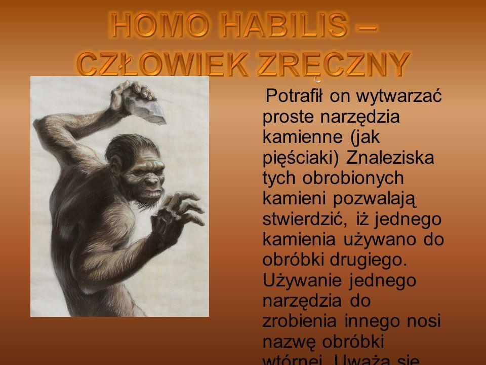 HOMO HABILIS – CZŁOWIEK ZRĘCZNY