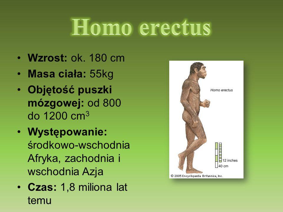 Homo erectus Wzrost: ok. 180 cm Masa ciała: 55kg
