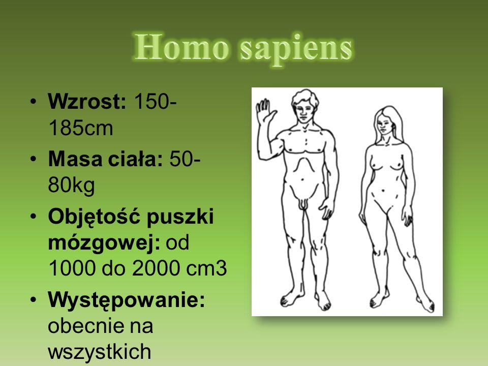 Homo sapiens Wzrost: 150-185cm Masa ciała: 50-80kg