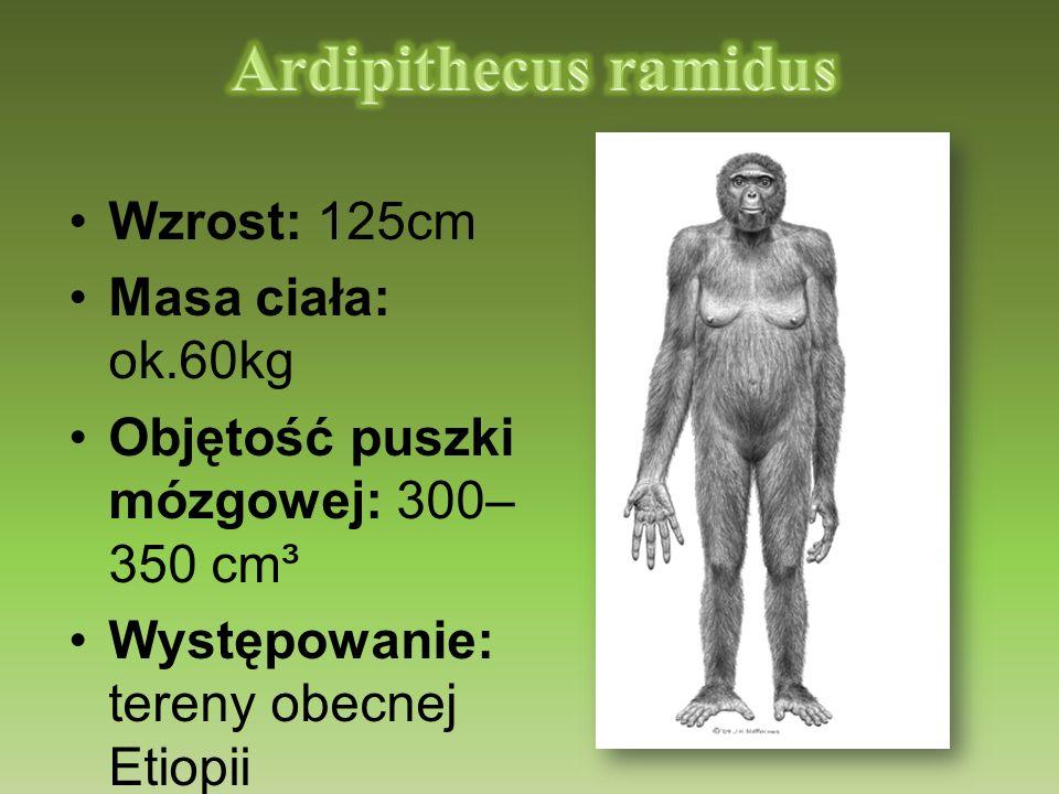 Ardipithecus ramidus Wzrost: 125cm Masa ciała: ok.60kg
