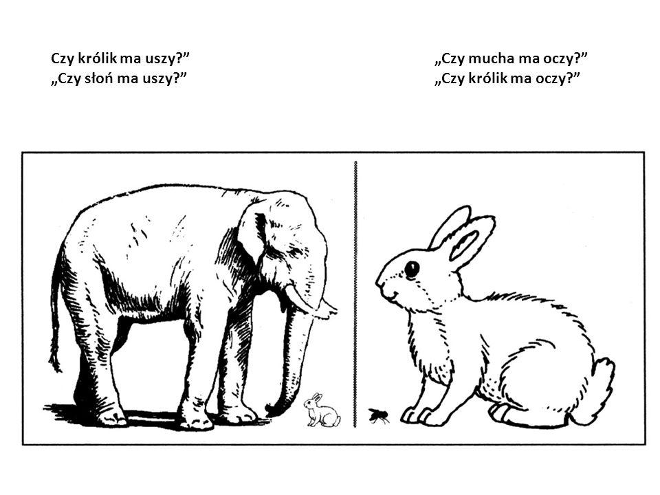 """Czy królik ma uszy """"Czy słoń ma uszy """"Czy mucha ma oczy """"Czy królik ma oczy"""