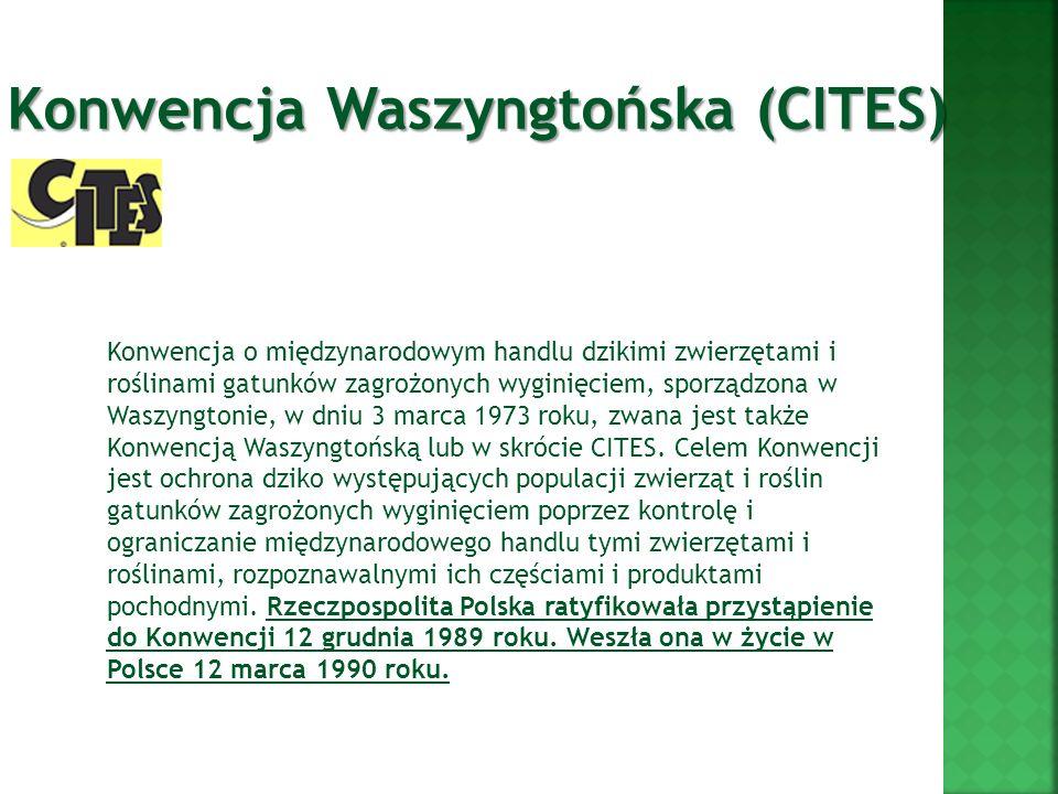 Konwencja Waszyngtońska (CITES)
