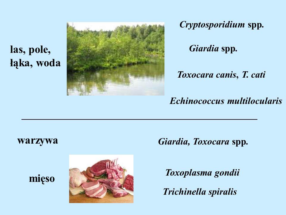 las, pole, łąka, woda warzywa mięso Cryptosporidium spp. Giardia spp.