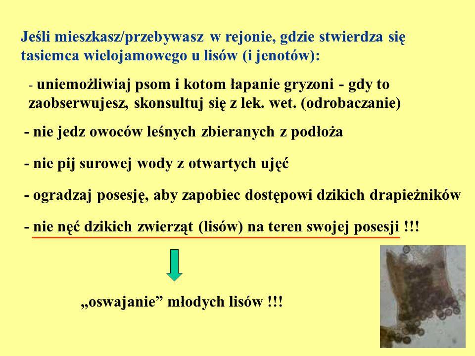 """""""oswajanie młodych lisów !!!"""
