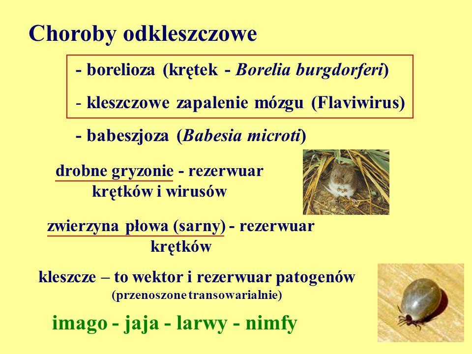 Choroby odkleszczowe imago - jaja - larwy - nimfy