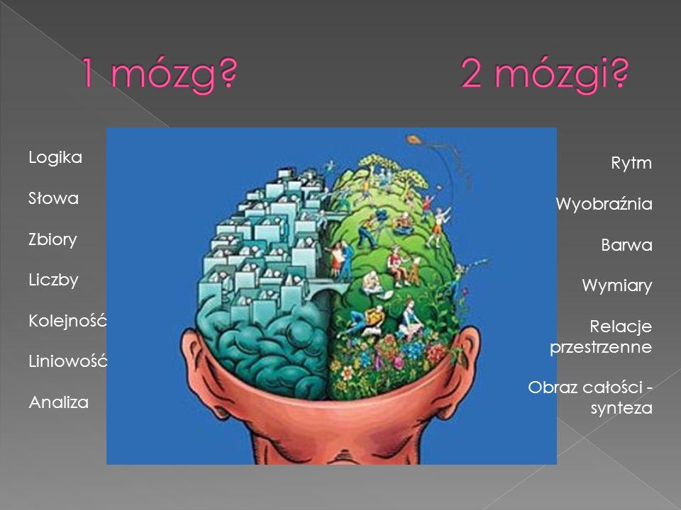 1 mózg 2 mózgi Logika Rytm Słowa Wyobraźnia Zbiory Barwa Liczby