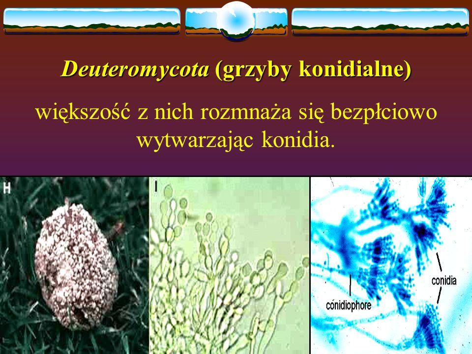 Deuteromycota (grzyby konidialne)