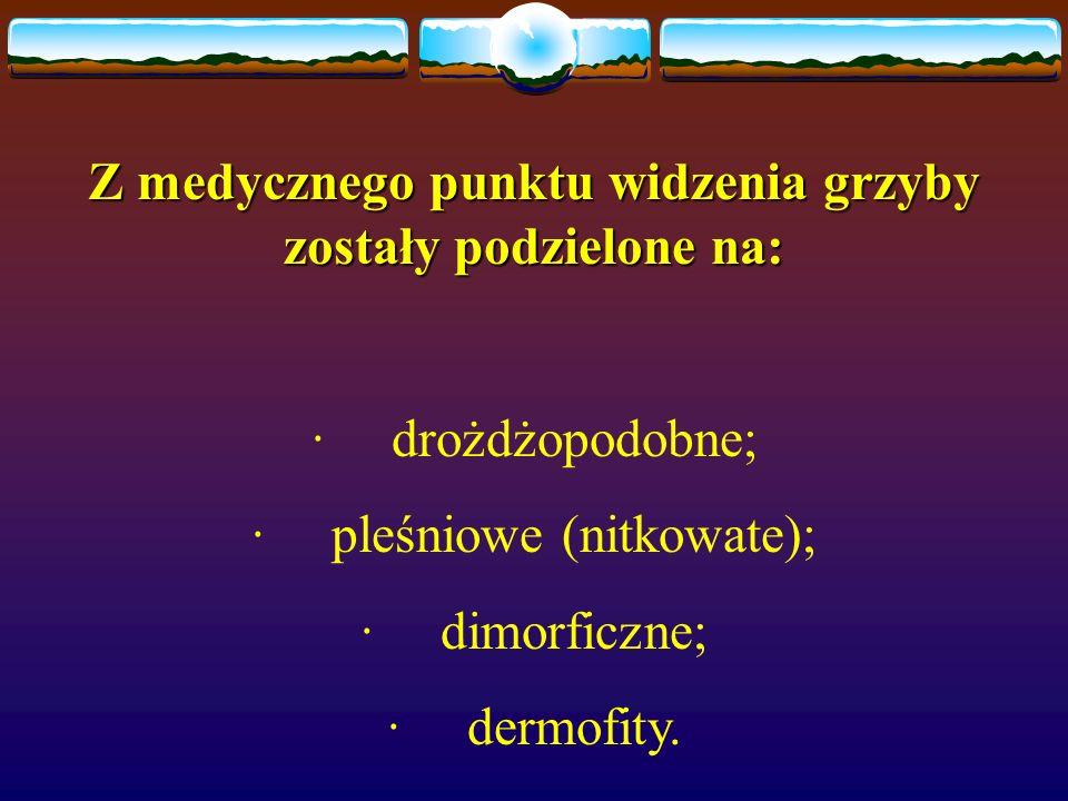 Z medycznego punktu widzenia grzyby zostały podzielone na: