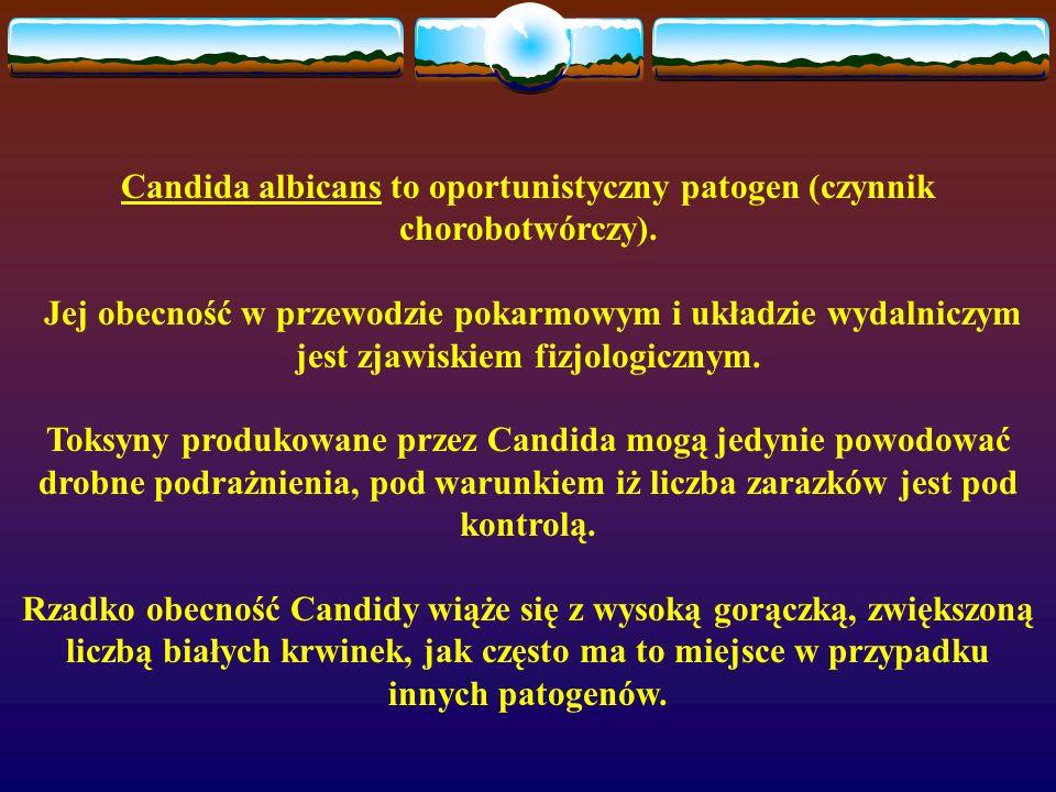 Candida albicans to oportunistyczny patogen (czynnik chorobotwórczy).