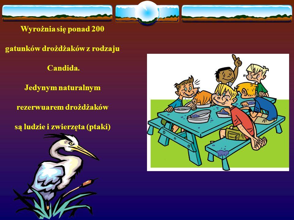 gatunków drożdżaków z rodzaju Candida. Jedynym naturalnym