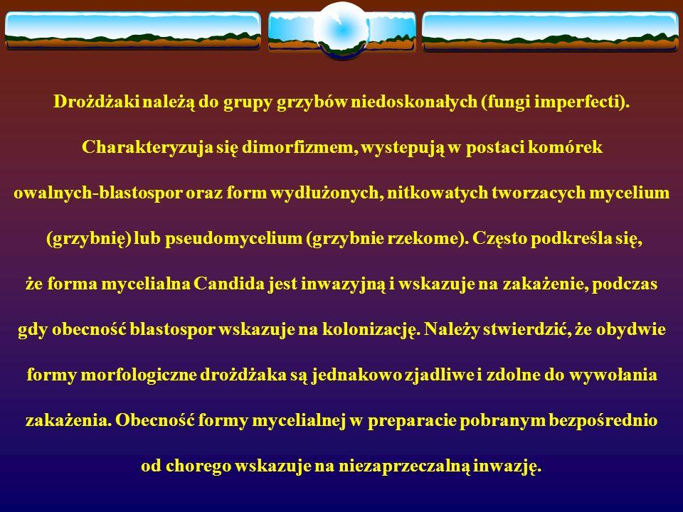 Drożdżaki należą do grupy grzybów niedoskonałych (fungi imperfecti).