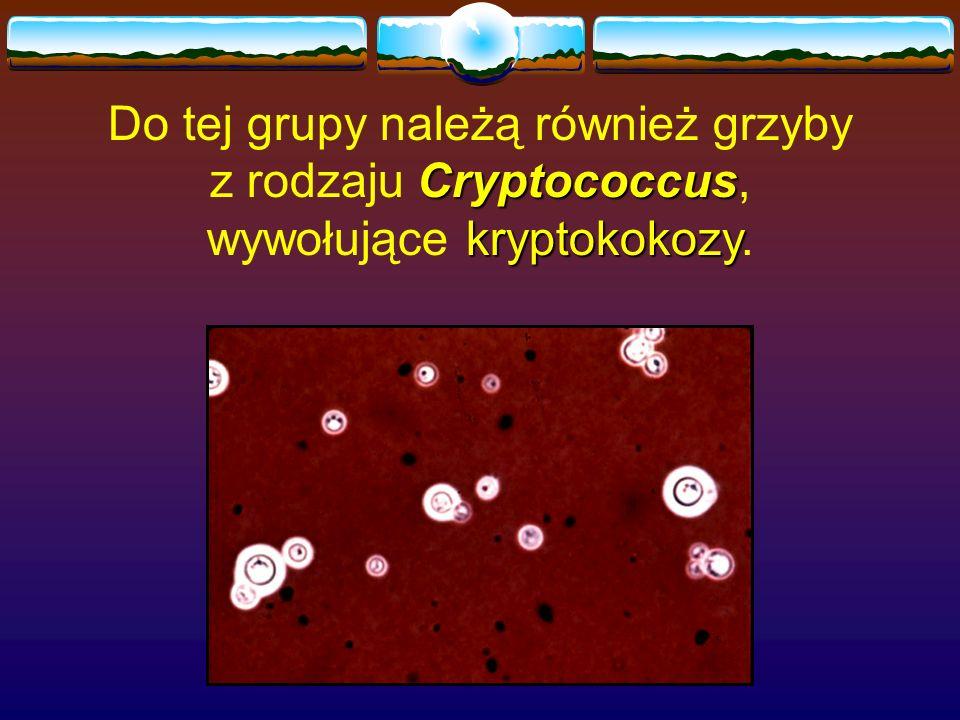 Do tej grupy należą również grzyby z rodzaju Cryptococcus, wywołujące kryptokokozy.