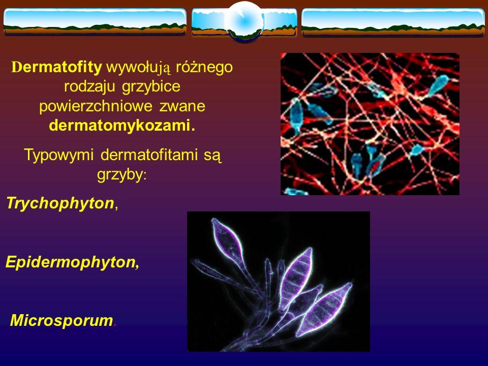Typowymi dermatofitami są grzyby: