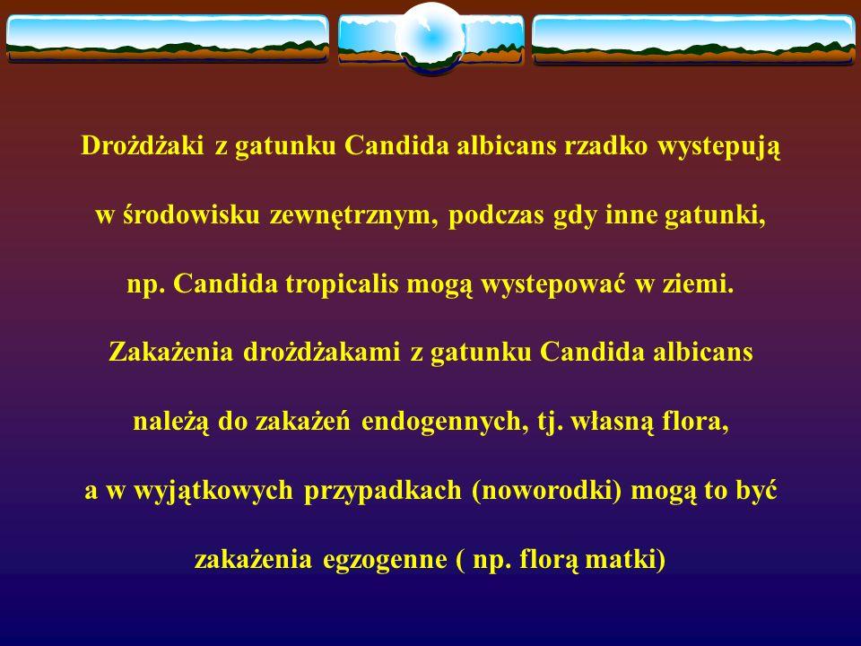 Drożdżaki z gatunku Candida albicans rzadko wystepują