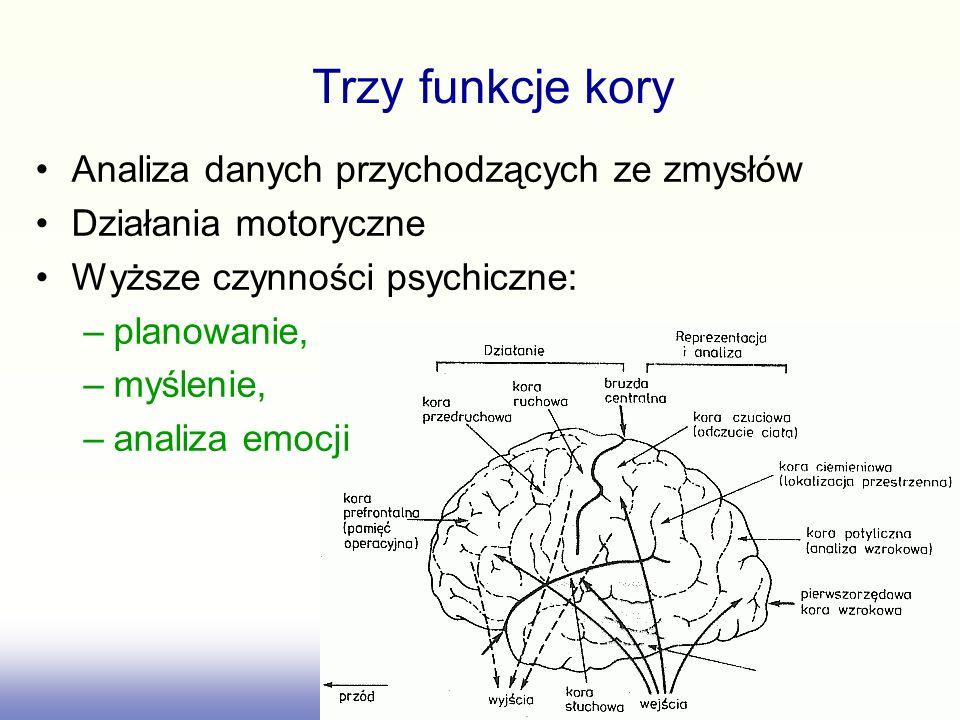 Trzy funkcje kory Analiza danych przychodzących ze zmysłów