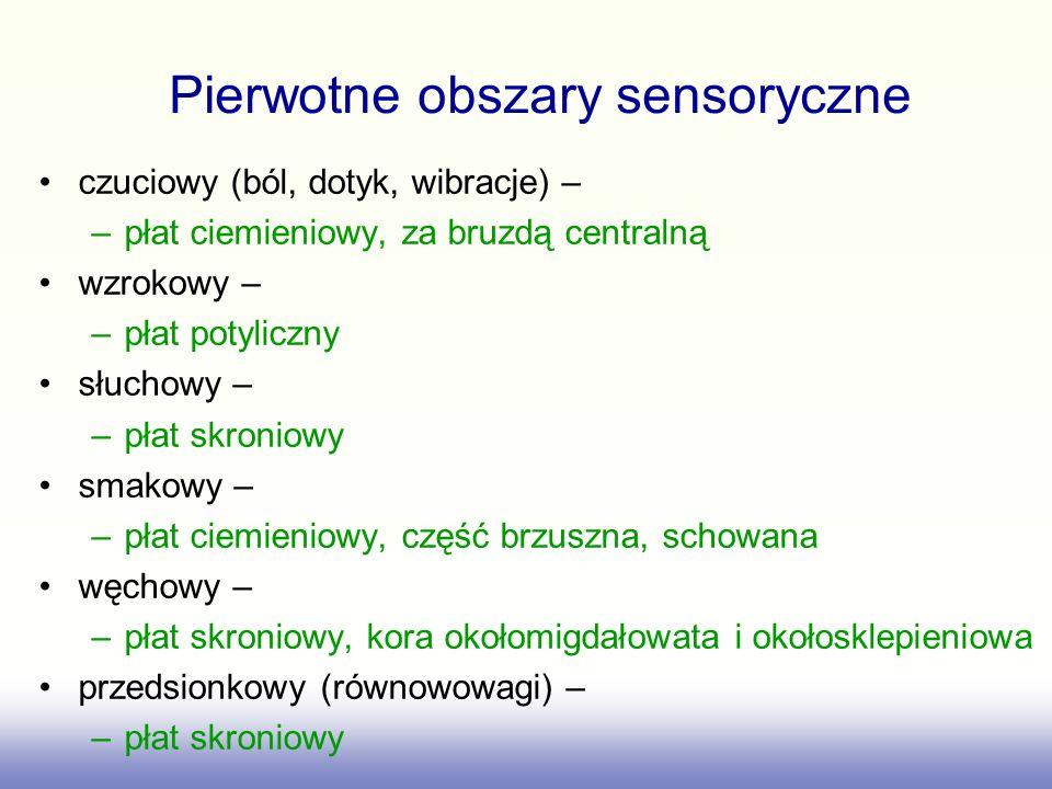 Pierwotne obszary sensoryczne