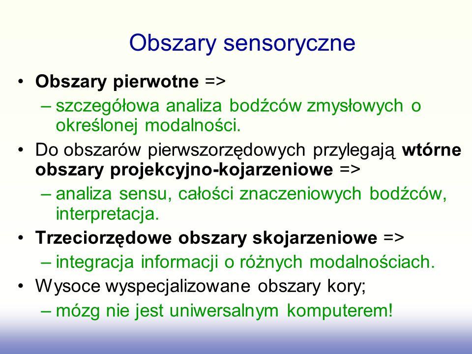 Obszary sensoryczne Obszary pierwotne =>