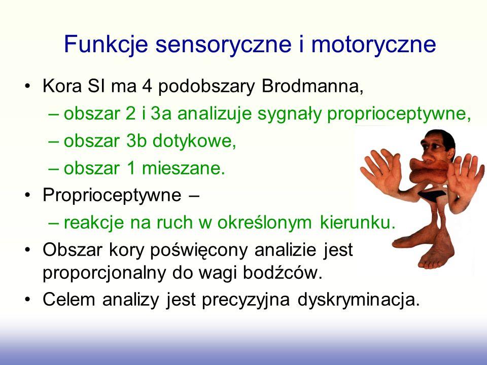 Funkcje sensoryczne i motoryczne