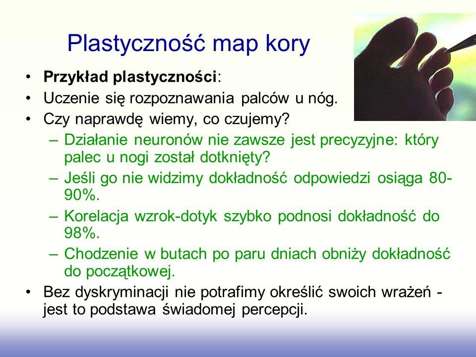 Plastyczność map kory Przykład plastyczności: