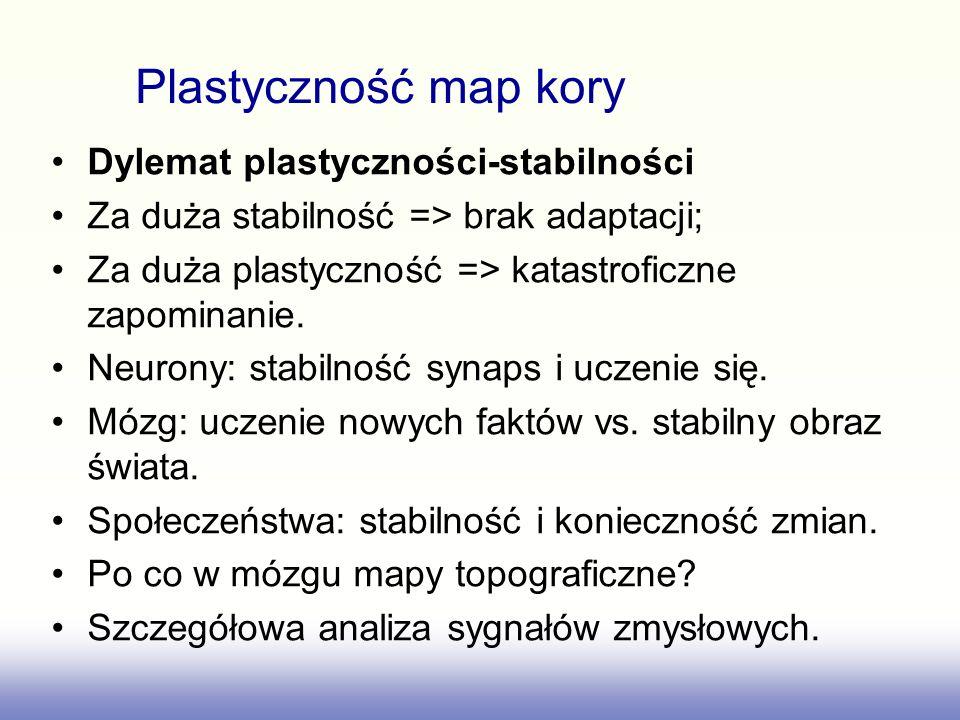 Plastyczność map kory Dylemat plastyczności-stabilności