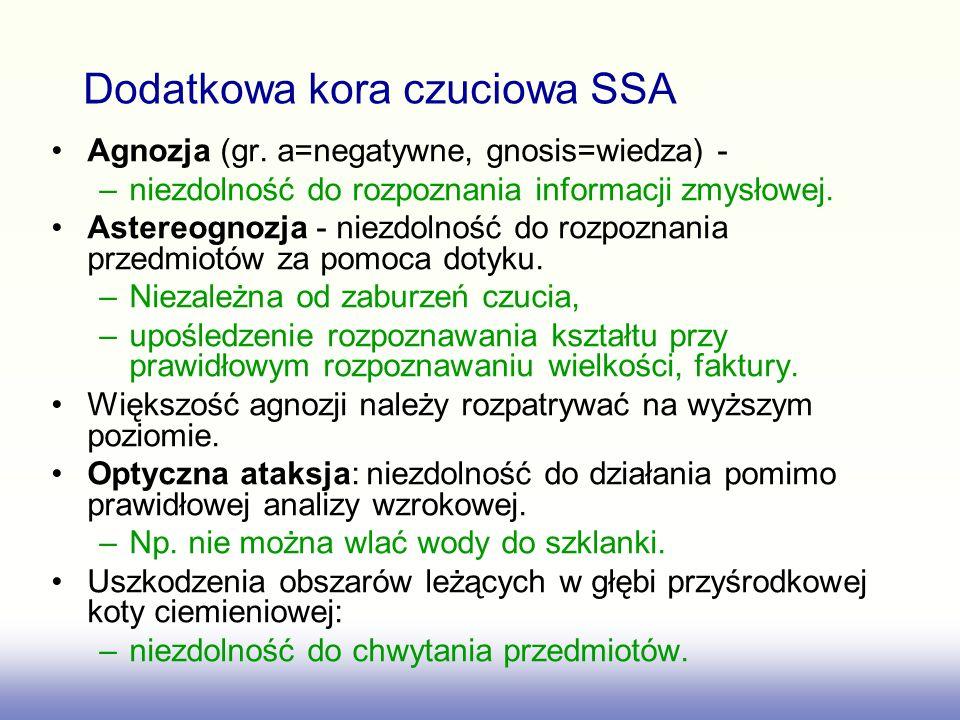 Dodatkowa kora czuciowa SSA