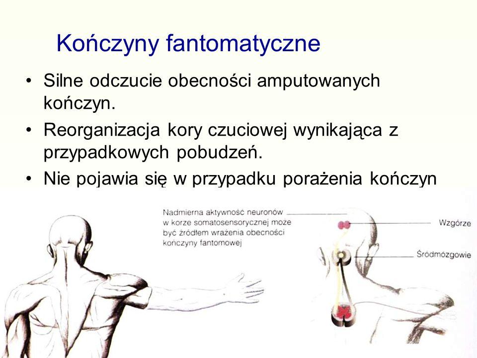 Kończyny fantomatyczne