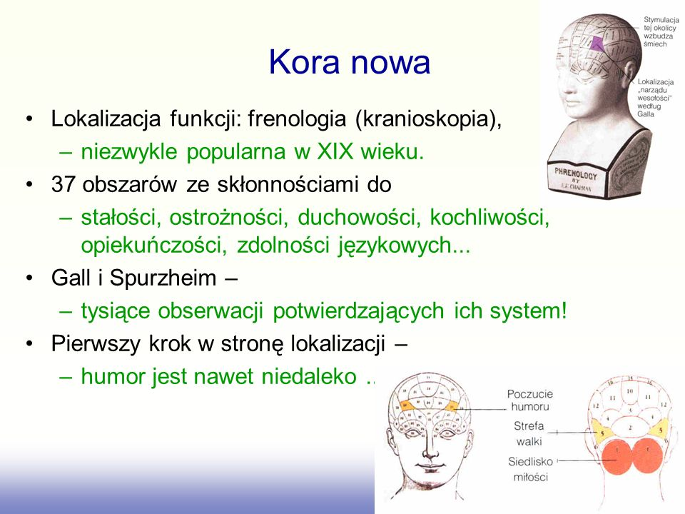 Kora nowa Lokalizacja funkcji: frenologia (kranioskopia),