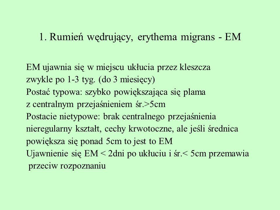 1. Rumień wędrujący, erythema migrans - EM
