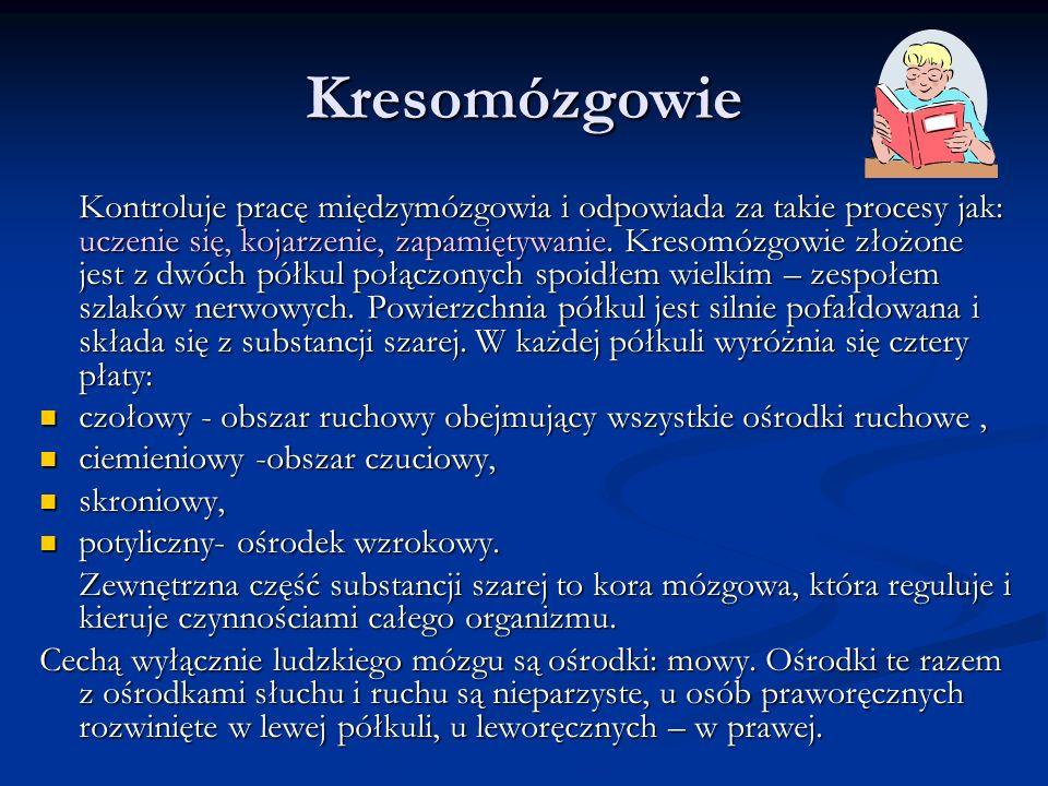Kresomózgowie
