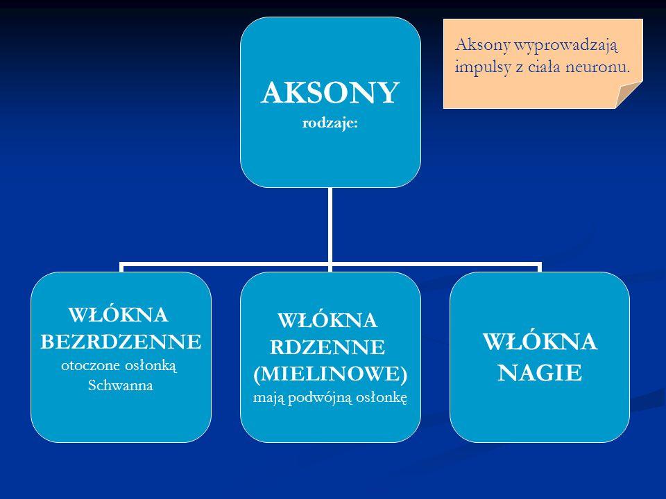 Aksony wyprowadzają impulsy z ciała neuronu.